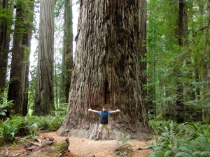 These are some big trees!
