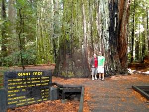 Giant Tree!