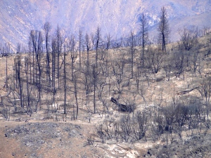 Fire Devastation near Yosemite