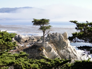 The Lone Cypress near Pebble Beach