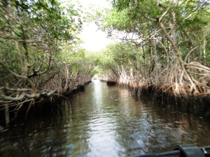 Airboat ride through the Mangroves