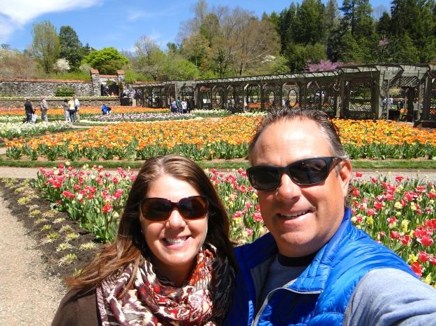 Walled garden - tulips galore!