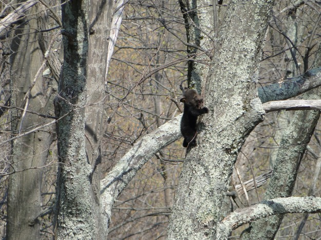 This little guy was about 40 feet up in the tree