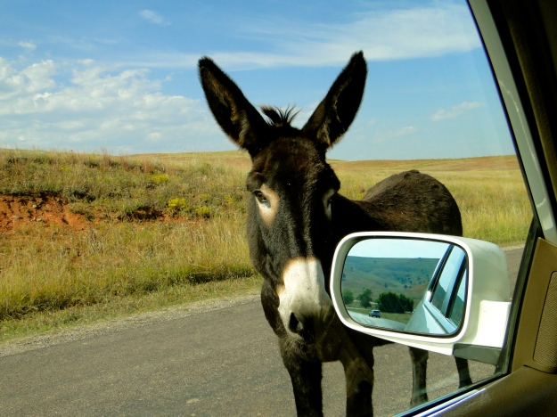 The Burro came right up to the car