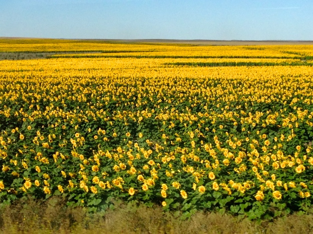 North Dakota is the leading state for Sunflower oil production