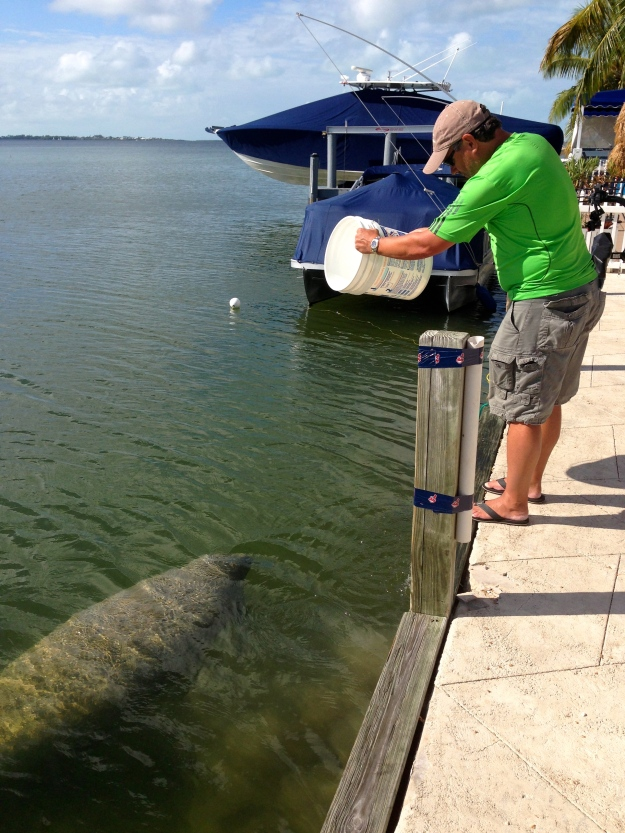 The Manatee's come right up to our site, they like the fresh water