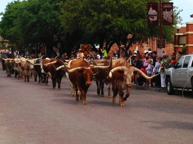 The Cattle Run